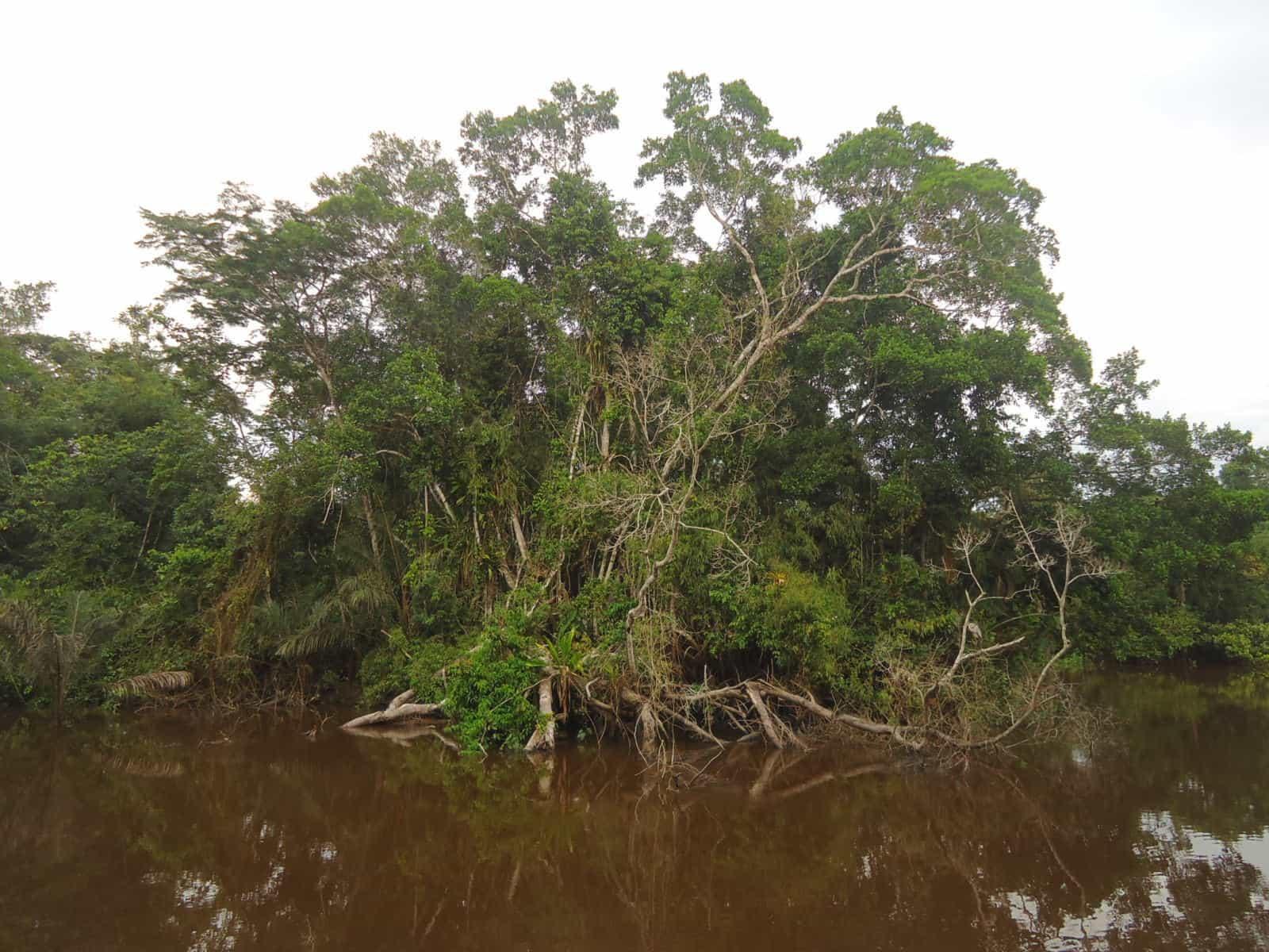 lagunas jungle peru